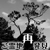 ご霊地再発見「大王松(ダイオウショウ)」