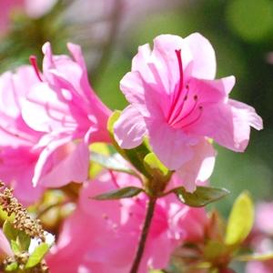 ご霊地の風景・春