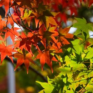 ご霊地の風景・秋