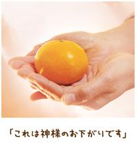 命かけ蒔いた信心の種 【金光新聞】