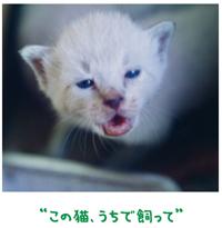子猫を迎えに来た親猫 【金光新聞】