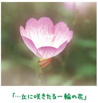 歌に託した妻への思い 【金光新聞】