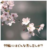 桜花に神のメッセージ 【金光新聞】